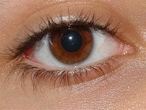 http://upload.wikimedia.org/wikipedia/commons/thumb/7/71/Menschliches_auge.jpg/250px-Menschliches_auge.jpg