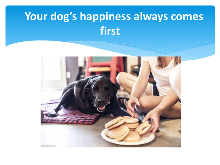 Your dog's happiness always comes first