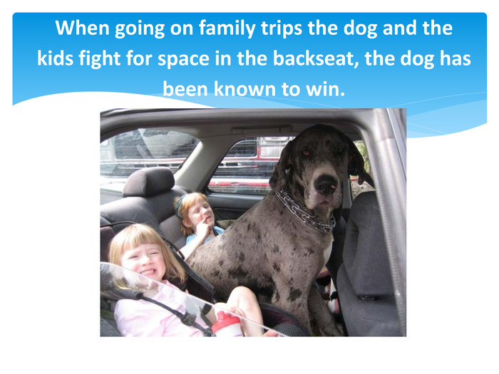 When going on family trips the dog and the kids fight for space in the backseat, the dog has been known to win.