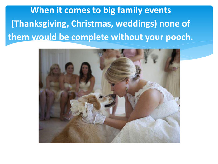 When it comes to big family events (Thanksgiving, Christmas, weddings) none of them would be complete without your pooch.