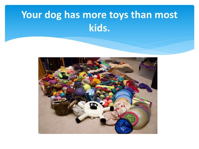Your dog has more toys than most kids.