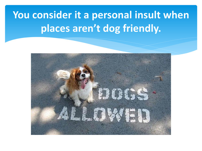 You consider it a personal insult when places aren't dog friendly.