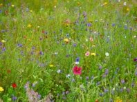 C:\Users\Lenovo\Downloads\colorful-wildflowers-1411744539SV0.jpg