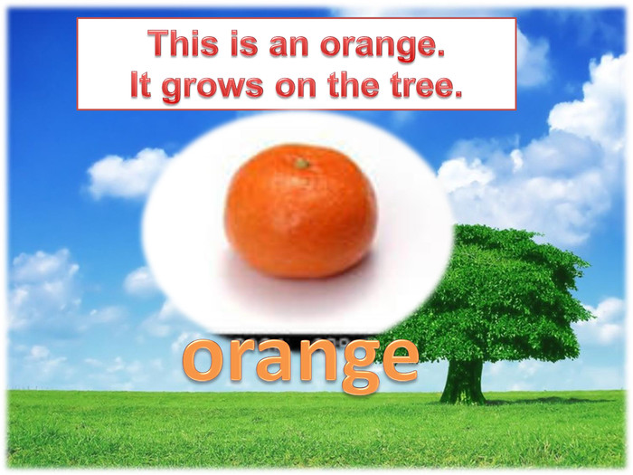 This is an orange. It grows on the tree.orange