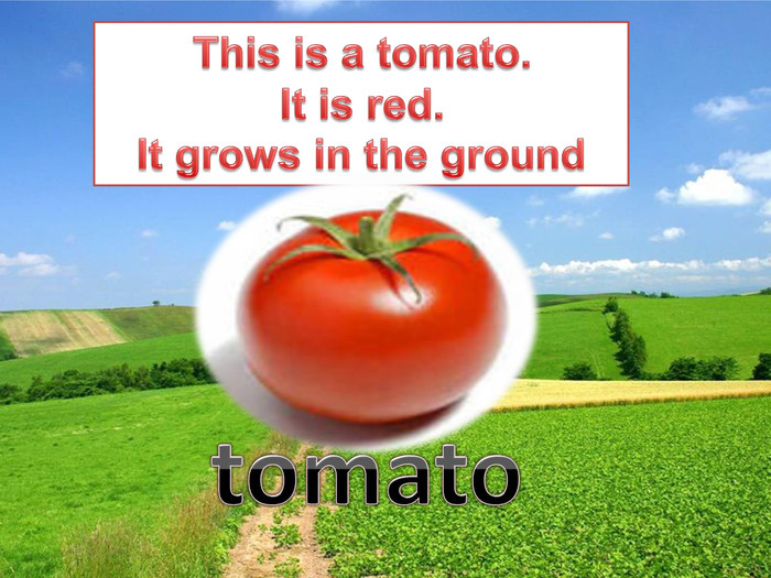 This is a tomato. It is red. It grows in the groundtomato