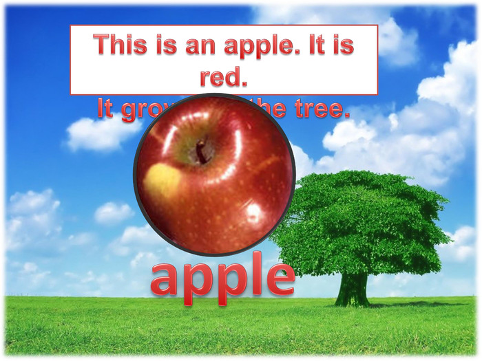 This is an apple. It is red. It grows on the tree.apple