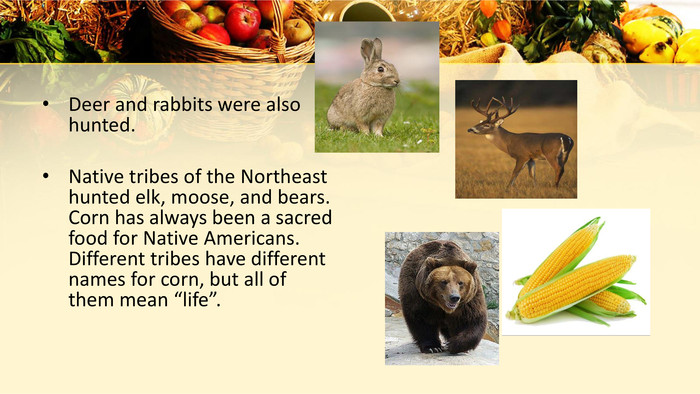 "Deer and rabbits were also hunted. Native tribes of the Northeast hunted elk, moose, and bears. Corn has always been a sacred food for Native Americans. Different tribes have different names for corn, but all of them mean ""life""."