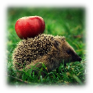 http://hah.co.ua/wp-content/uploads/2011/12/hadgehog_by_remiguisz_o-300x300.jpg