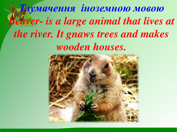 Тлумачення  іноземною мовою Beaver- is a large animal that lives at the river. It gnaws trees and makes wooden houses.