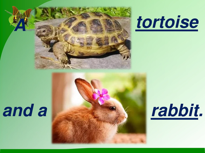 A  tortoise  and a  rabbit.