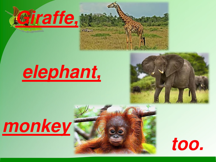 Giraffe,  elephant, monkey too.