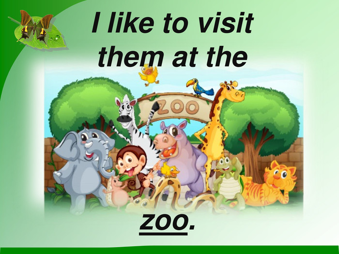 I like to visit them at the  zoo.