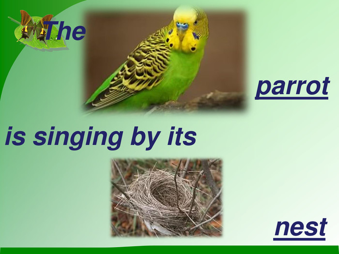 The parrot is singing by its   nest