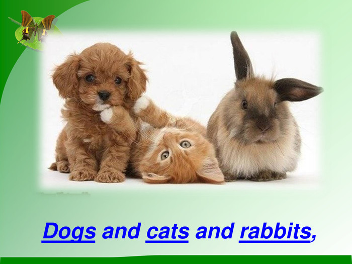 Dogs and cats and rabbits,