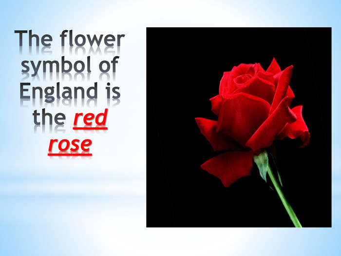The flower symbol of England is the red rose
