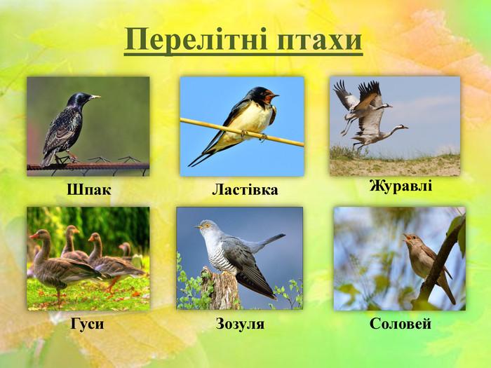 """Урок + презентація """"Перелітні та осілі птахи"""""""