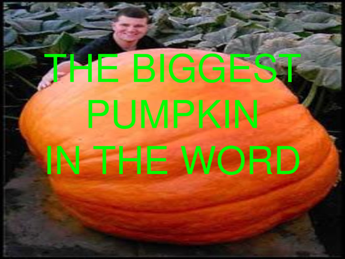 THE BIGGEST PUMPKININ THE WORD