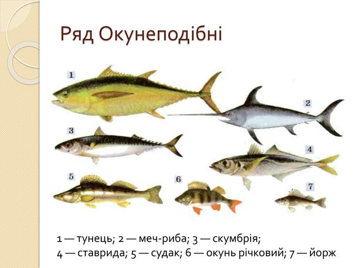 """Презентація """"Різноманітність риб"""""""