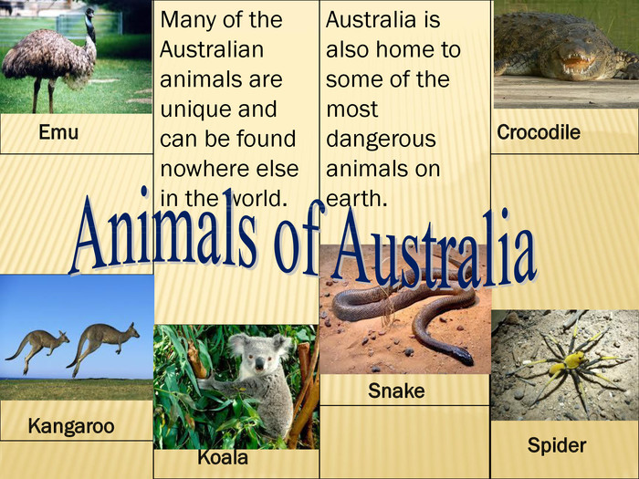 Many of the Australian animals are unique and can be found nowhere else in the world. Emu Kangaroo Koala. Australia is also home to some of the most dangerous animals on earth. Crocodile Spider Snake. Animals of Australia