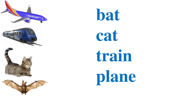 bat	cat	train	plane