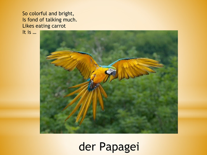 So colorful and bright,Is fond of talking much. Likes eating carrot. It is …der Papagei