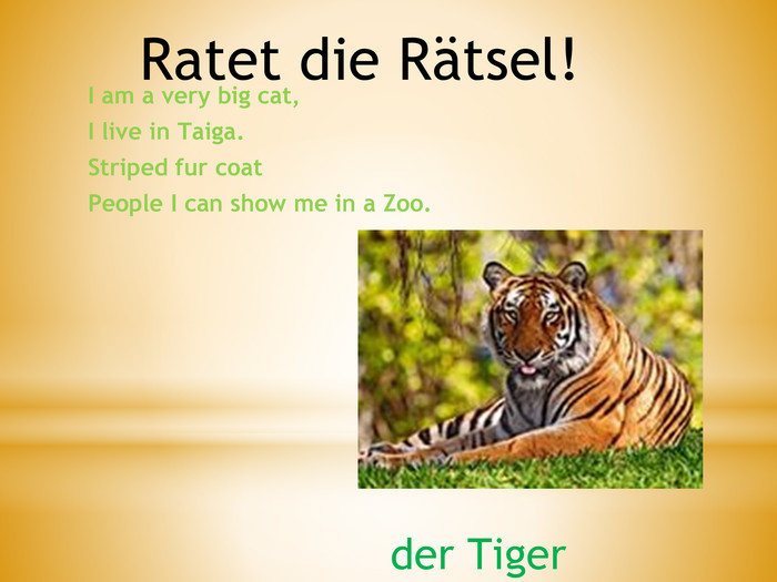 I am a very big cat,I live in Taiga. Striped fur coat. People I can show me in a Zoo. Ratet die Rätsel!der Tiger