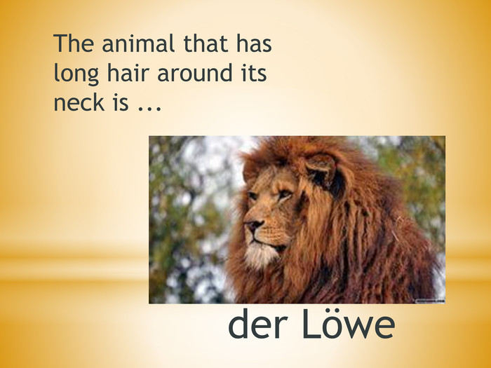 The animal that has long hair around its neck is ... der Löwe