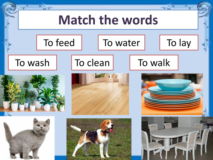Match the words. To feed To clean. To water. To wash. To walk. To lay