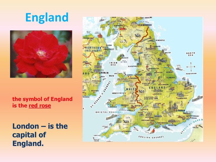 Englandthe symbol of England is the red rose. London – is the capital of England.