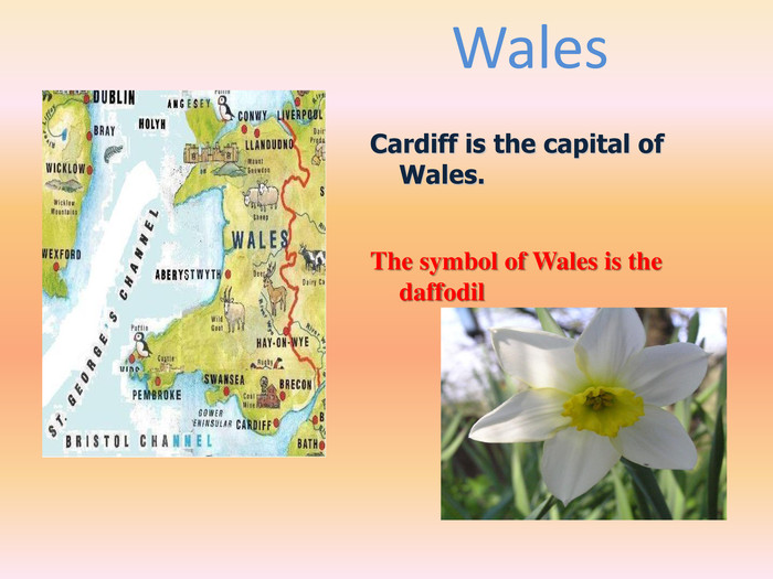 Wales Cardiff is the capital of Wales. The symbol of Wales is the daffodil