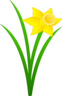 Daffodil Pictures - Clipart library