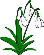 Snowdrops Lilies Of Valley Flowers On Trees Hq Wallpapers on
