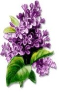Free Lilac Clipart