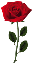 Red Rose PNG Art Picture