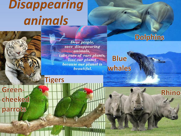 Disappearing animals Tigers. Green-cheeked parrots. Blue whales. Rhinos. Dolphins