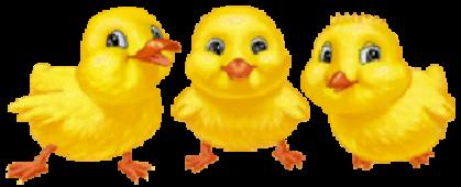 картинки анимашки курчата зеленый городок