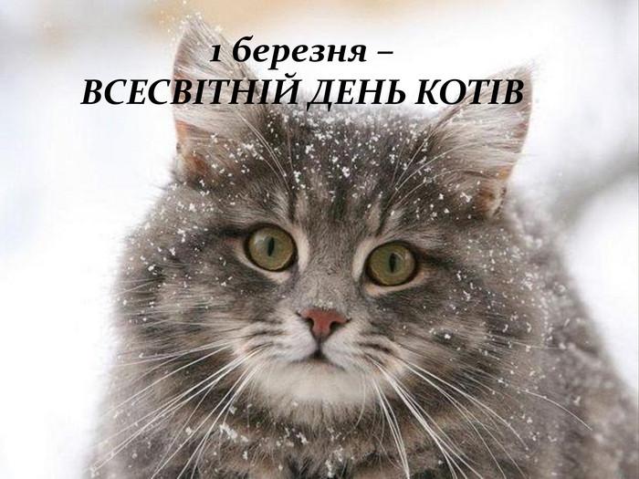 """Презентація """"Всесвітній день кота"""""""