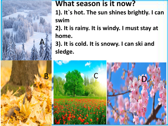 What season is it now?1). It`s hot. The sun shines brightly. I can swim2). It is rainy. It is windy. I must stay at home.3). It is cold. It is snowy. I can ski and sledge. ACDB