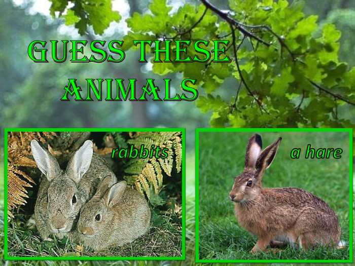 rabbitsa hare. Guess these animals