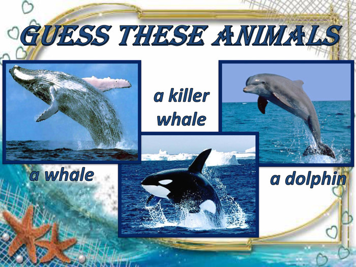 a dolphin a whalea killer whale. Guess these animals