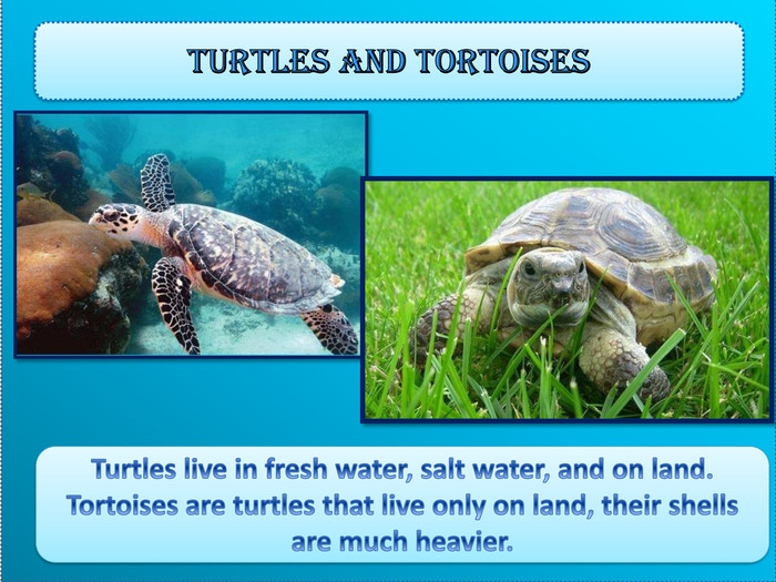 Turtles and tortoises. Turtles live in fresh water, salt water, and on land. Tortoises are turtles that live only on land, their shells are much heavier.