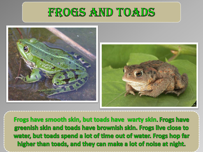 Frogs and toads. Frogs have smooth skin, but toads have warty skin. Frogs have greenish skin and toads have brownish skin. Frogs live close to water, but toads spend a lot of time out of water. Frogs hop far higher than toads, and they can make a lot of noise at night.