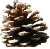 http://hochu.ua/pictures_ckfinder/images/1260224574_pinecone-main_full.jpg