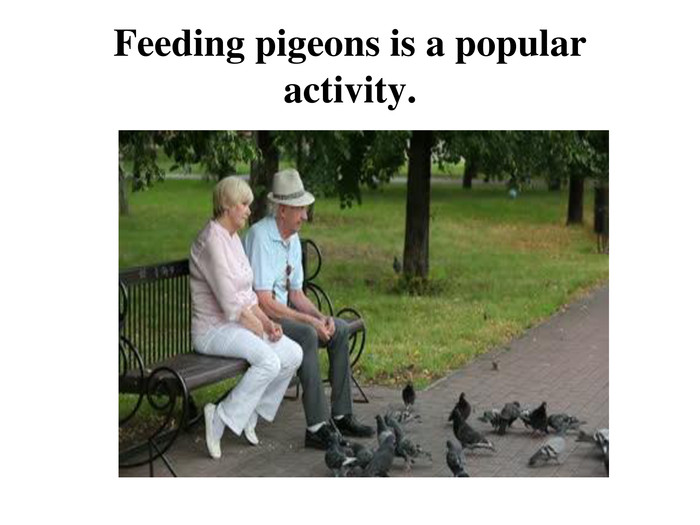 Feeding pigeons is a popular activity.
