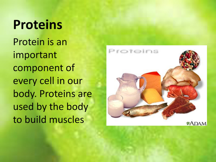 Proteins. Protein is an important component of every cell in our body. Proteins are used by the body to build muscles