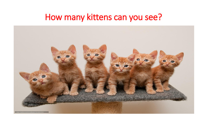 How many kittens can you see?