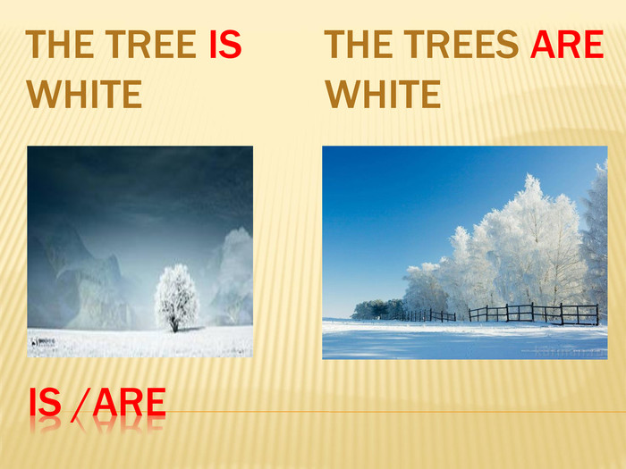 Is /are. The tree is white. The trees are white