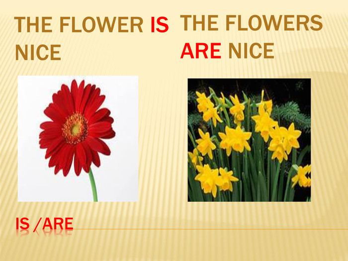 Is /are. The flower is nice. The flowers are nice