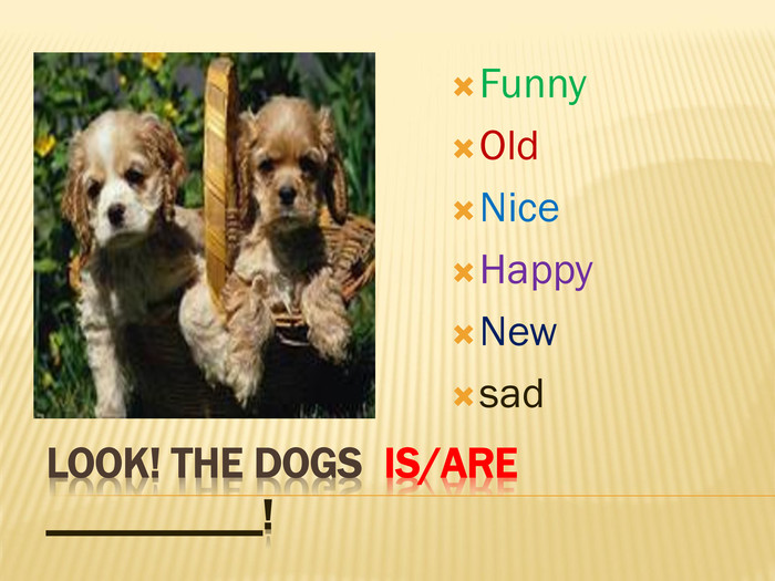 Look! The dogs is/are __________!Funny. Old. Nice. Happy. Newsad
