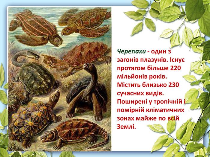 Черепахи - один з загонів плазунів. Існує протягом більше 220 мільйонів  років. Містить близько 878e7e41c1864